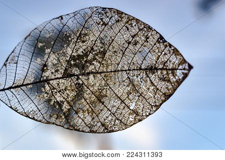 detailed texture of a rotten mangrove tree leaf