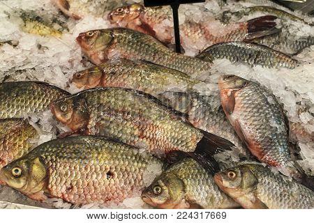 Fresh fish crucian. Fish carp lies on the ice.