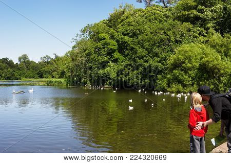 Calzean estate, Ayrshire, Scotland, UK: July 25, 2015 - A man and a child standing by pond and looking at seagulls, ducks and swan