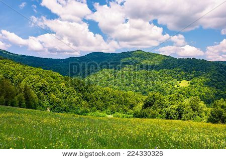 grassy fields with wild herbs in mountains. beautiful summer landscape in Ukrainian alps under the blue sky with clouds