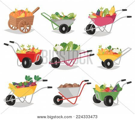 Vegetables in wheelbarrow vector healthy nutrition of vegetably tomato pepper and carrot in wheel barrow for vegetarians eating farming food illustration vegetated set isolated on white background.