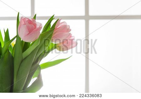 Beautiful flowers bouquet background. Pink tulips in window backlight with copy space. Mockup for greeting card