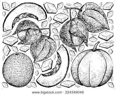 Fresh Fruit, Illustration Background of Hand Drawn Sketch of Muskmelon or Cantaloupe and Muskmelon and Cape Gooseberry.