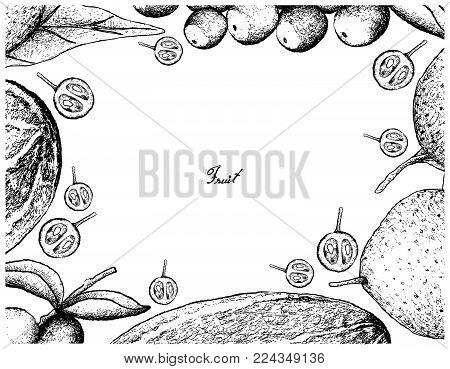 Fruit, Illustration Hand Drawn Sketch of Thai Muskmelon or Thai Cantaloupe, Grapefruit and Camu Camu Isolated on White Background.