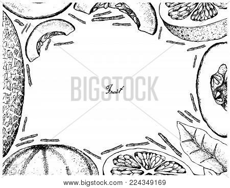 Fruit, Illustration Frame of Hand Drawn Sketch of Grapefruit and Cantaloupe or Muskmelon Isolated on White Background.