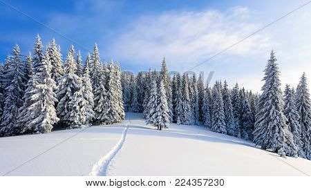 Winter landscape with fair trees under the snow. Scenery for the tourists. Christmas holidays. Trampled path in the snowdrifts.