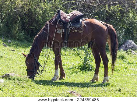 horse with a saddle on nature . In the park in nature