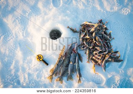 Good catch, close-up, fishing rod and fish near the ice-hole on the winter river in a sunny day.