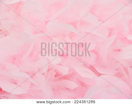 a pink feather boa background with nobody.