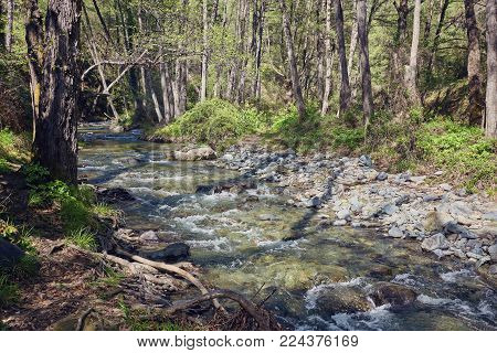 Water flowing in a mountain river creating small waterfalls at Troodos mountains, Cyprus