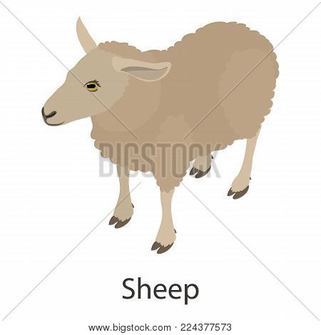 Sheep icon. Isometric illustration of sheep vector icon for web