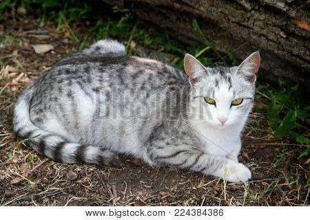 gray striped cat lying on ground