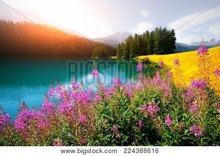 Amazing sunny day at Champferersee lake in the Swiss Alps. Silvaplana village, Switzerland, Europe. Landscape photography