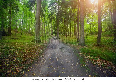 road and coniferous forest