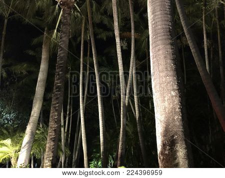 Night Time Palm Trees