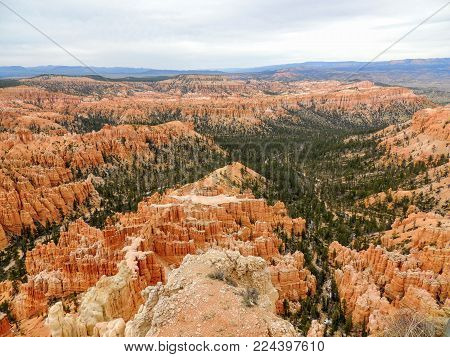 Pine Trees In Bryce Canyon National Park In Utah Blue Partly Cloudy Skies.