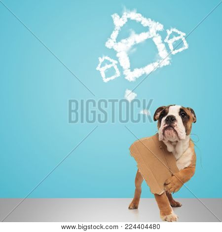 english bulldog holding a sign at its neck and dreams of a new home , dog adoption concept