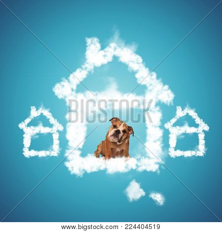 sad little english bulldog puppy begging to be adopted, sitting inside of a house shaped cloud, dog adoption concept