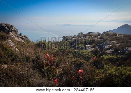 Breathtaking landscape of Table Mountain and African nature landscape, Cape Town, South Africa