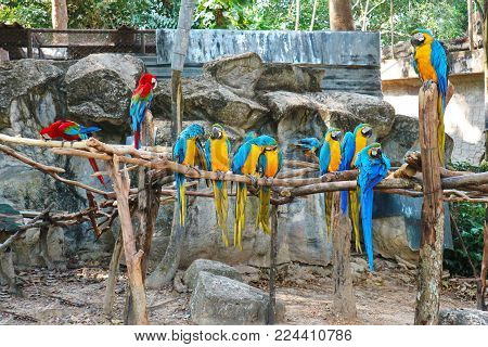 Colorful Macaws (Blue Throated Macaws) Standing On The Perch
