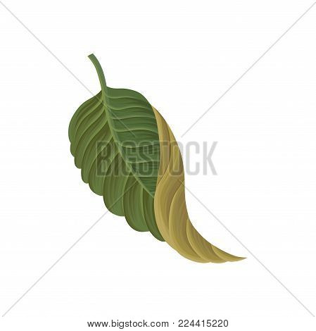 Green leaf of tropical plant, tropic botany element vector Illustration isolated on a white background