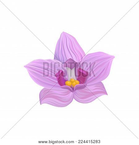 Tropical flower, tropic botany element vector Illustration isolated on a white backgroundd