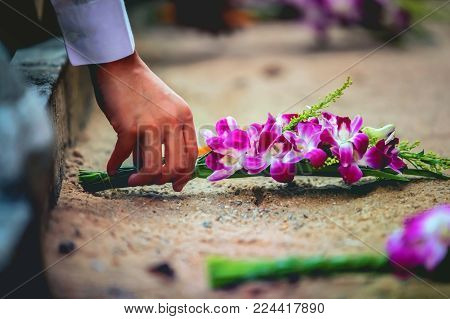 Hand picked orchids,purple flowers of orchid phalaenopsis.