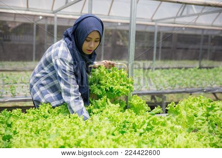 happy asian woman harvesting vegetable from her own hydrophonic farm