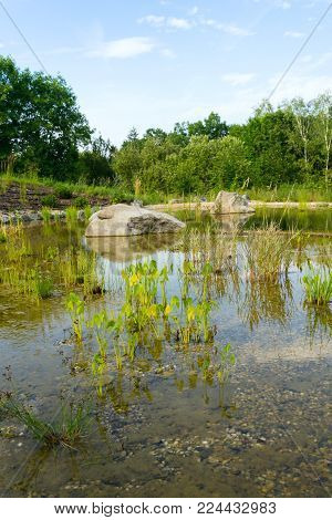 Plants Used At Natural Swimming Pond For Purifying Water