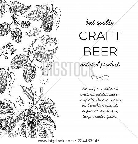 Black and white colored with hop cartoons with berries, foliage and many decorative squiggles and inscription about natural product of craft beerbest quality hand drawn doodle vector illustration