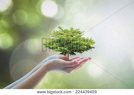 Growing Tree To Save Ecological Sustainability, Sustainable Environment, And Corporate Social Respon