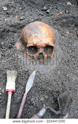 Archaeological excavation with skull still half buried in the ground and tools lying beside