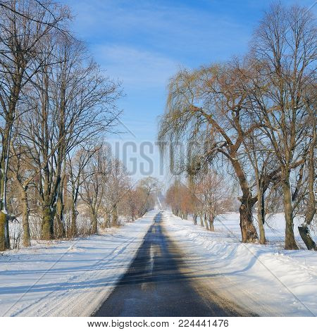 Winter road through snowy fields and trees . Agricultural landscape.