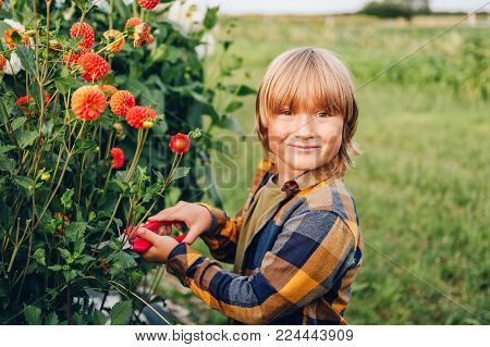 Cute little boy working in autumn garden, child taking care of colorful chrysanthemum and dahlia flowers, gardener kid enjoying warm and sunny day outside