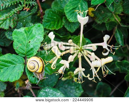travel in France - snail near flowers flowers on green meadow on coast of Gouffre gulf of English Channel near Plougrescant town of the Cotes-d'Armor department in Brittany in summer