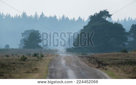 Hilly Misty Landscape With Fir Forest On Horizon.