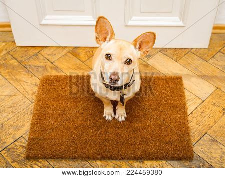 Poidenco Dog Waiting For Owner To Play  And Go For A Walk On Door Mat ,behind Home Door Entrance