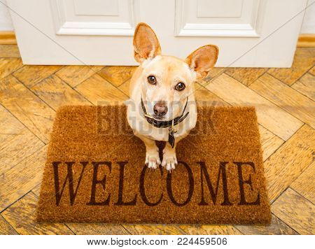 Podenco Dog Waiting For Owner To Play  And Go For A Walk On Door Mat ,behind Home Door Entrance And
