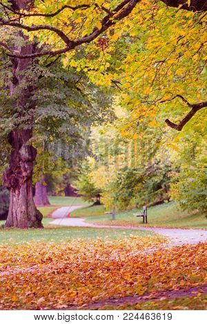 Beautiful autumn landscape. Winding parkway in perspective with trees in fall colors and blended green and yellow colors on the ground. Wooden benches go into perspective. Blurred bluish background