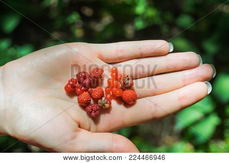 Wild different berries in a hand with blurred green background. Red raspberry, strawberry, cloudberry from swedish forest