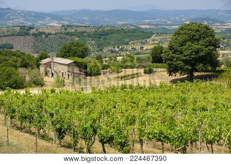 Country landscape at summer along the road from Orvieto to Todi, Umbria, Italy, at summer. Vineyard