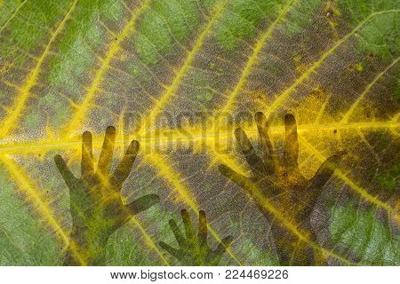 Bond between people and nature hands leaves