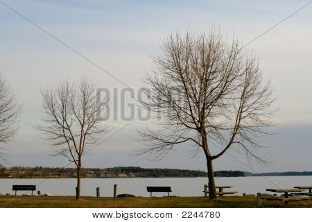 Two Trees By A Lake