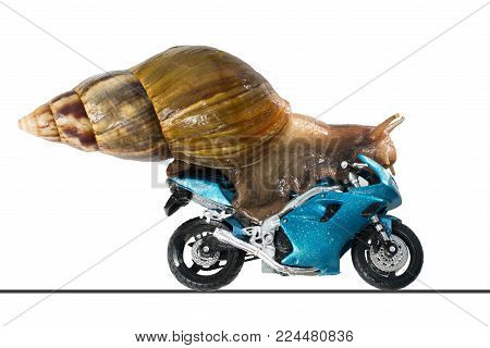 A big snail rides a racing motorcycle, concept of speed and success, isolated on a white background