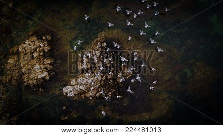 Aerial Photo Taken With A Drone From Above As A Flock Of Seagulls Fly Of Their Perch In The Ocean