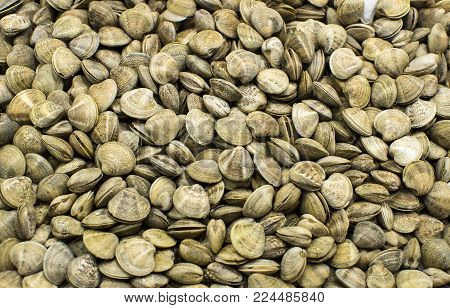Background of edible raw shellfish shells on the market shelves