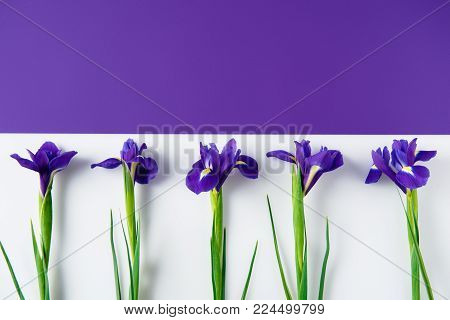 top view of iris flowers on halved iris and white surface