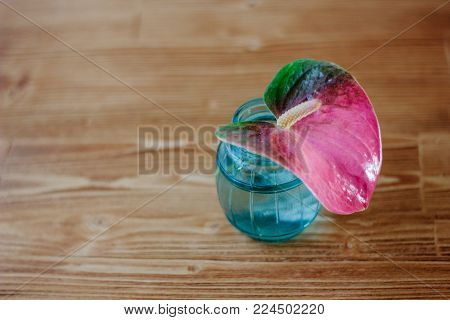 Pink Anthurium Flower In Glass Bottle Over Wooden Background.
