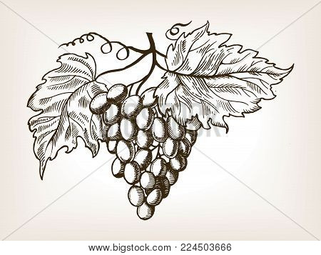 Bunch of grapes with leaves engraving vector illustration. Brown aged backgroung. Scratch board style imitation. Hand drawn image.