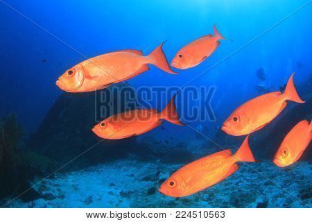 Scuba divers, coral reef and fish